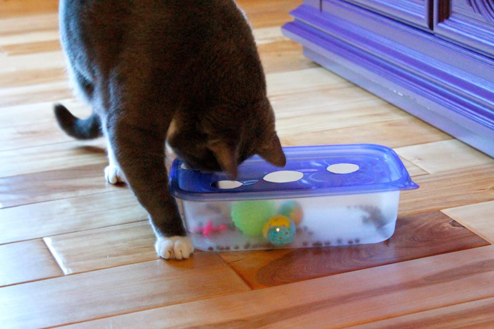 Сделать в домашних условиях игрушку для кошки