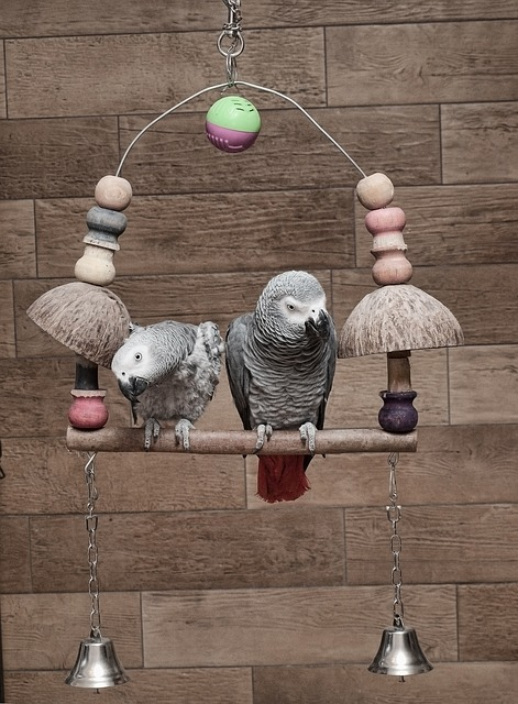 Toys for pet birds - Parrots on a Swing