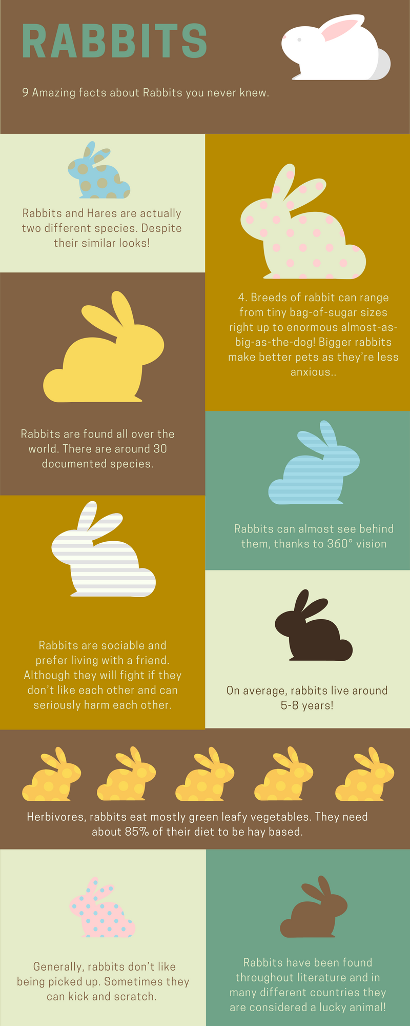 Bunny Trivia 9 Amazing Facts About Pet Rabbits Cpc Cares Blog