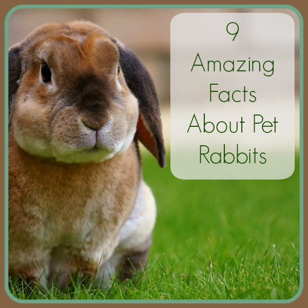 Bunny Trivia 9 Amazing Facts About Pet Rabbits: Bunny Trivia: 9 Amazing Facts About Pet Rabbits