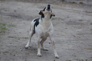 Lonely Dog - The Dog Bark Decoded: What Is My Dog Saying? - Petrest