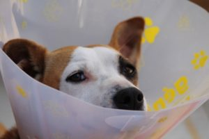 Ouch Dog - The Dog Bark Decoded: What Is My Dog Saying? - Petrest
