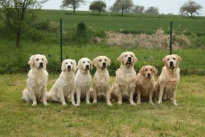 Pack Dog - The Dog Bark Decoded: What Is My Dog Saying? - Petrest