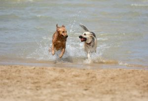 Playful Dog - The Dog Bark Decoded: What Is My Dog Saying? - Petrest