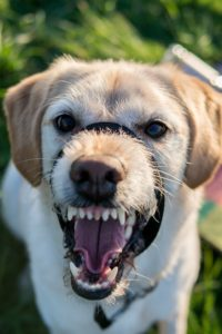 Stop Dog - The Dog Bark Decoded: What Is My Dog Saying? - Petrest