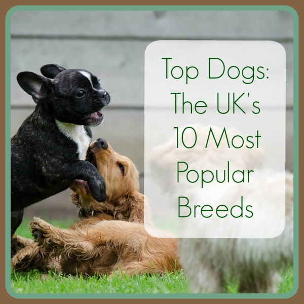 UK top dogs