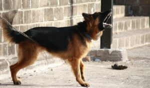 Warning Dog - The Dog Bark Decoded: What Is My Dog Saying? - Petrest