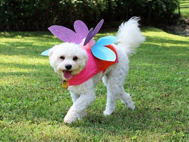 Dog fairy costume