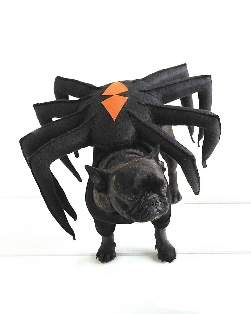 Dog dressed in spider Halloween costume