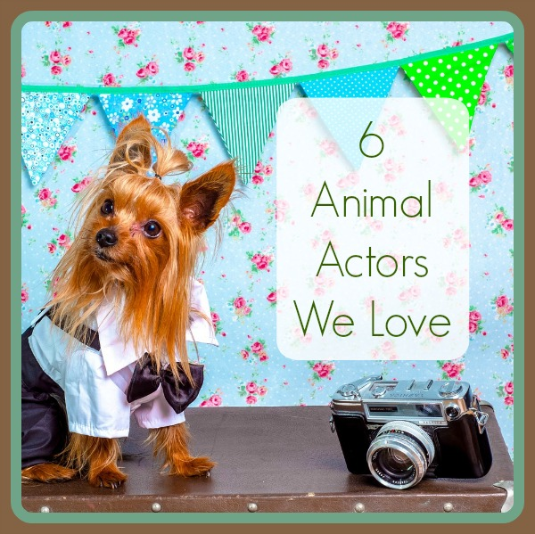6 Animal Actors