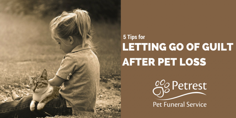 letting go of guilt after pet loss