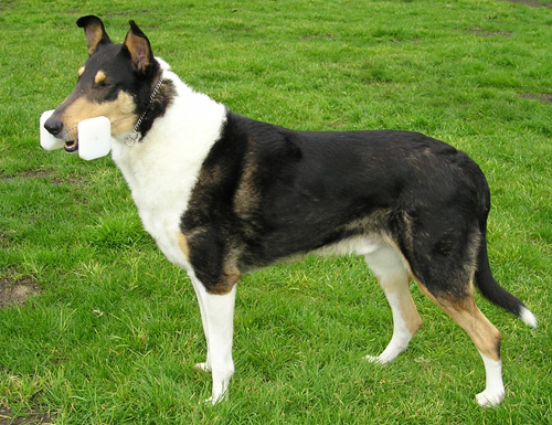 5 Rare Dog Breeds You Ve Probably Never Heard Of Cpc Cares Blog