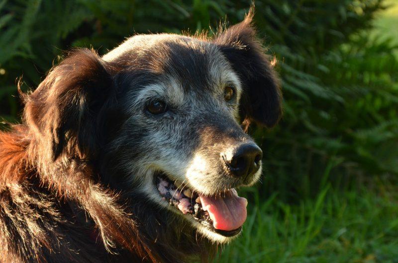 adopt an older pet