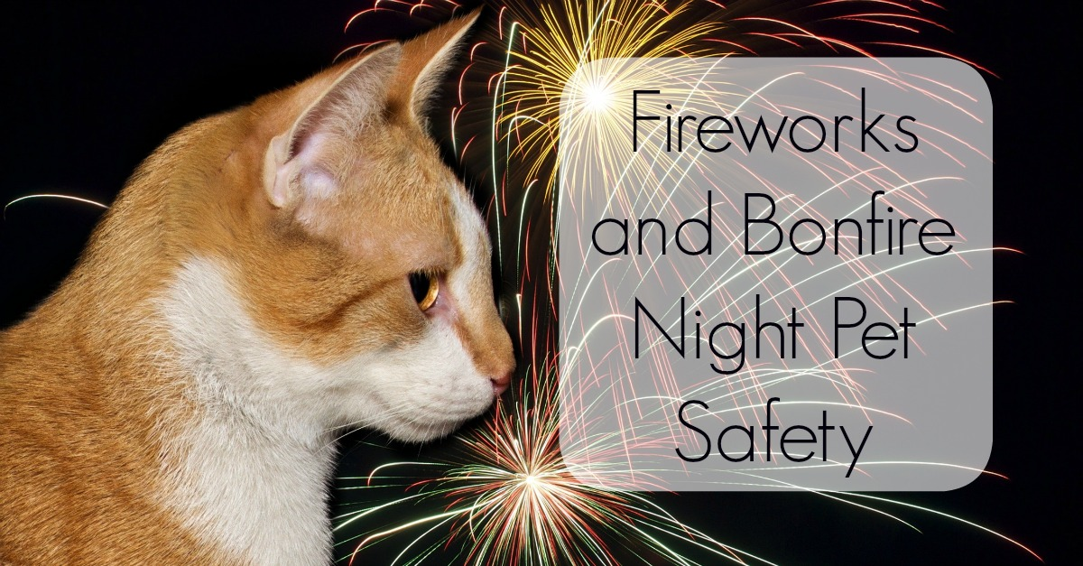 Fireworks and Bonfire Night Pet Safety - Petrest