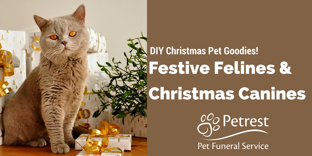 DIY Christmas Goodies for Pets - Petrest