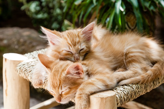 two cats asleep on a stool