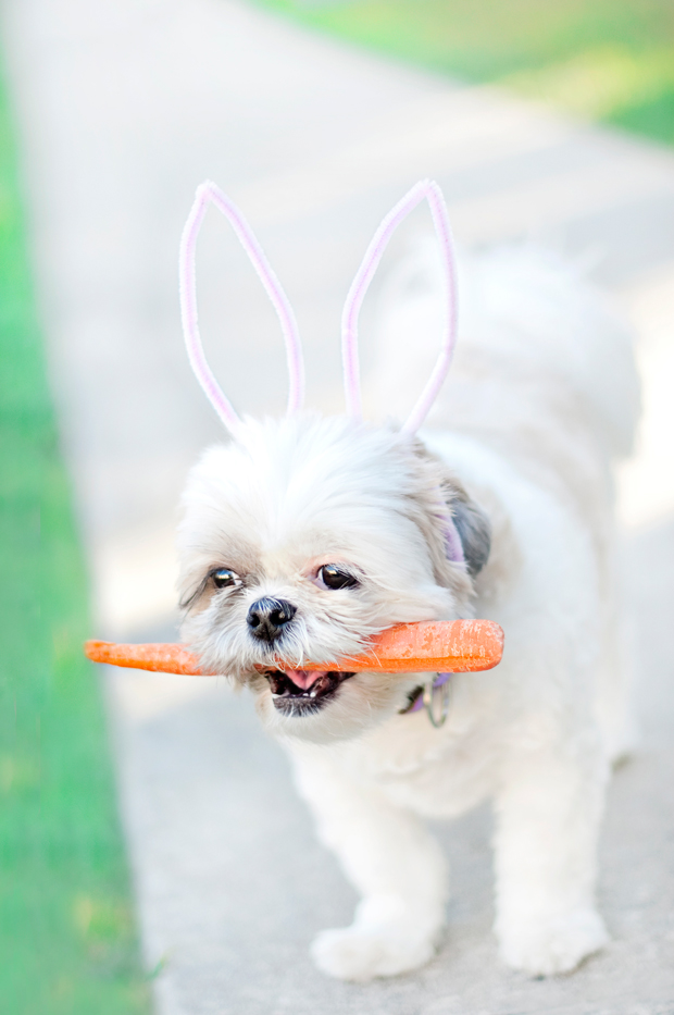 Diy Easter Pet Costumes
