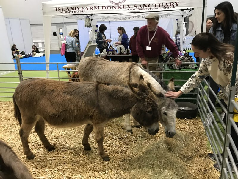 National Pet Show - Donkey section