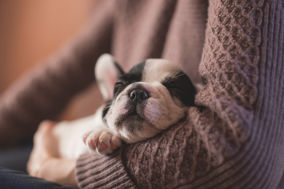 Bringing a puppy or dog into your home