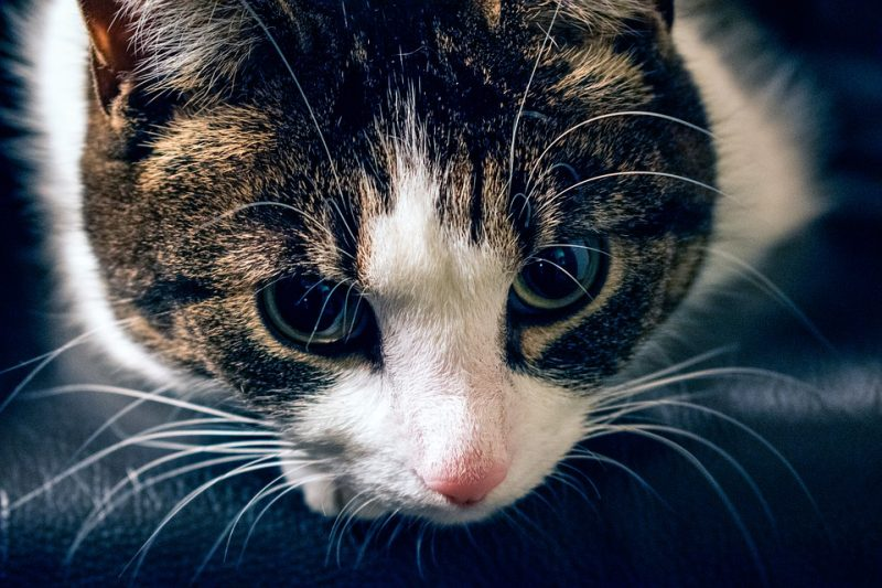 Bittersweet emotions of being a pet owner and coping with Pet Loss
