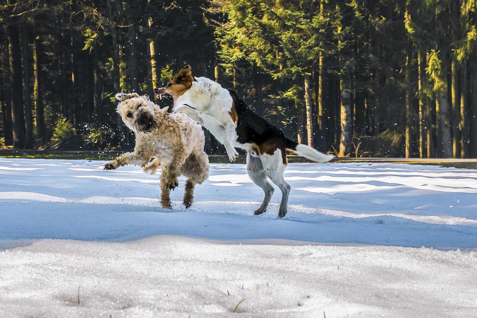 Dog biting another dog