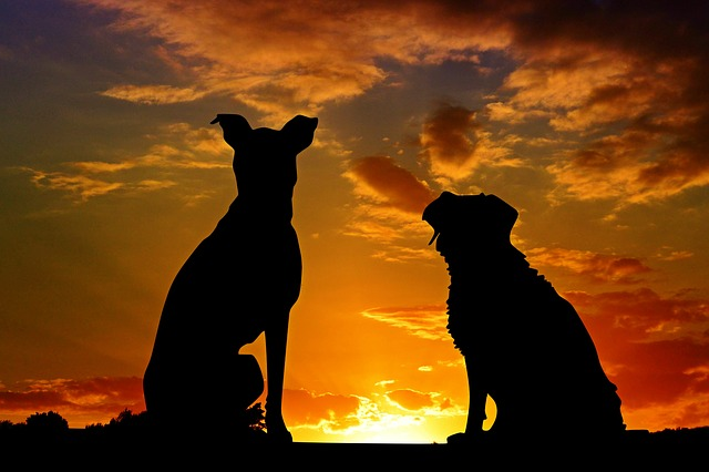 Silhouettes of a cat and dog against a sunset background- Pet loss