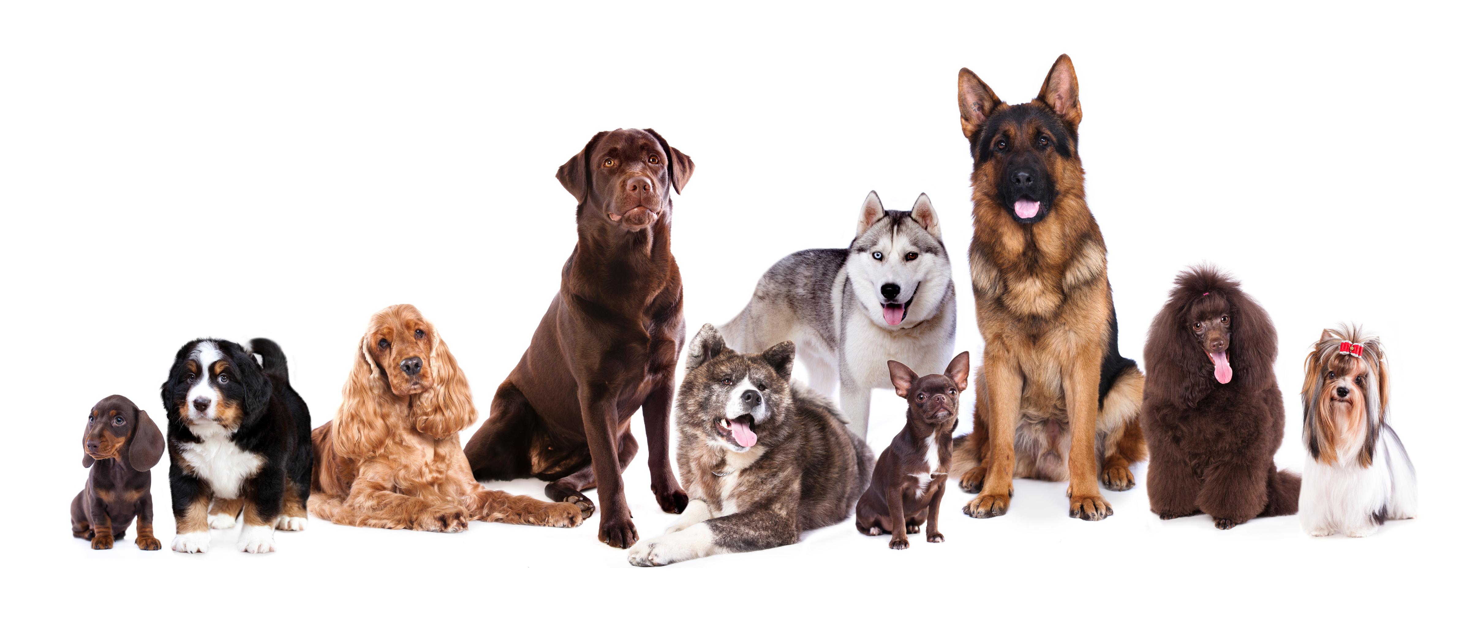 UK's most popular dog breeds