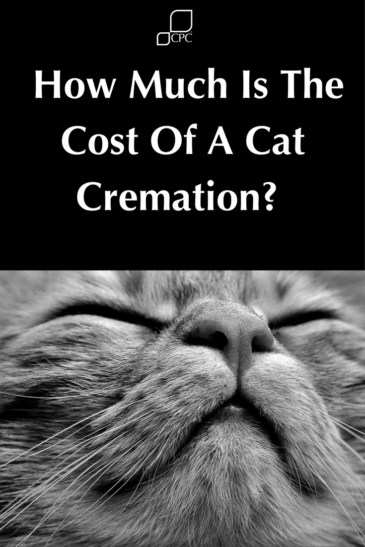 How Much Does An Individual Cat Cremation Cost?