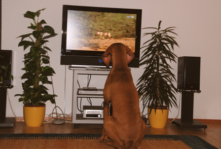 dog sitting in front of the television.