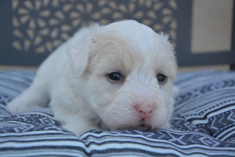 puppy farm - newborn puppy lying on a cushion