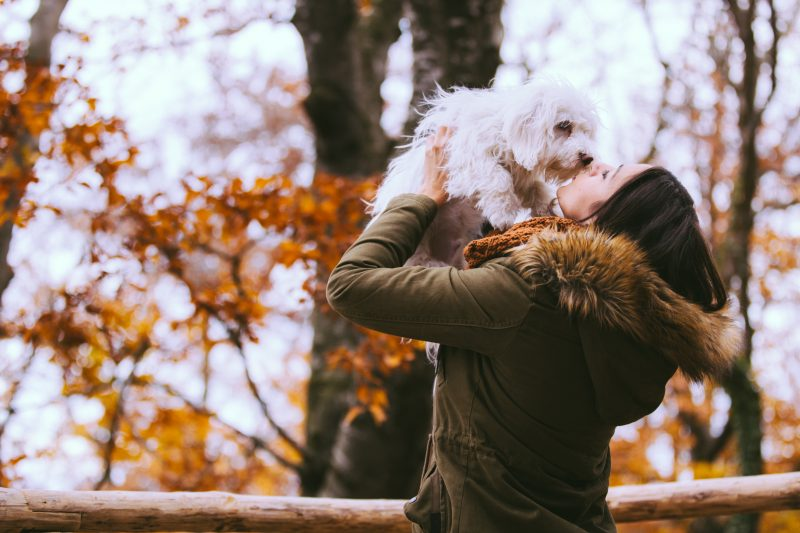 autumn with your pet