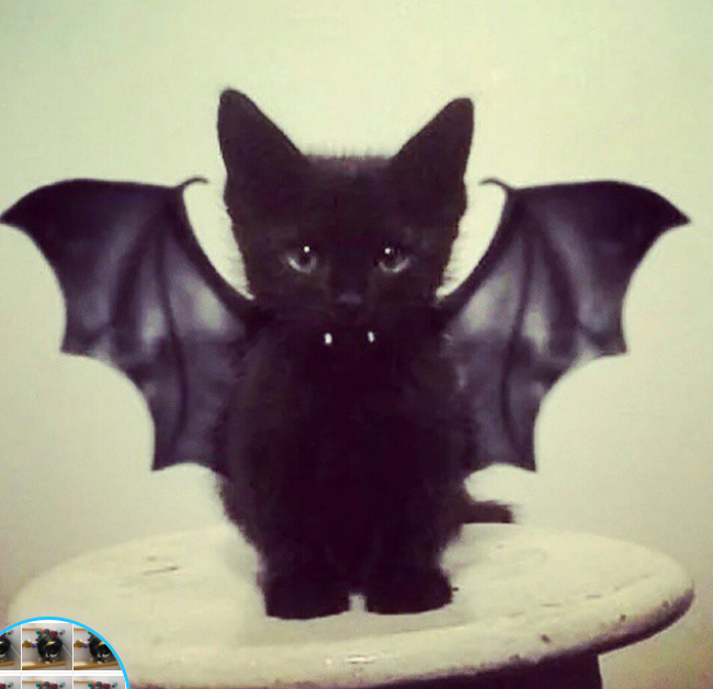 Halloween with pets - cat dressed as bat