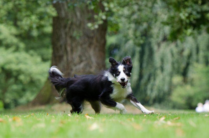 dog running around in field