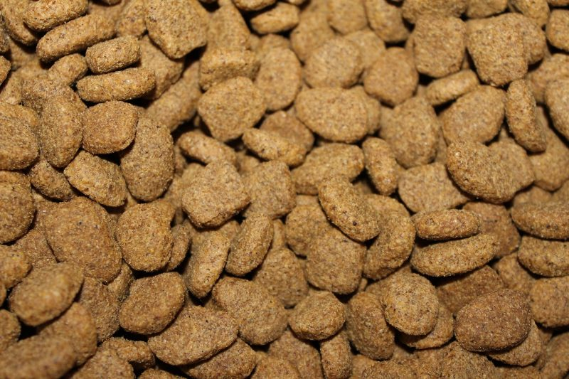 kibble can be used in a stuffed dog toy