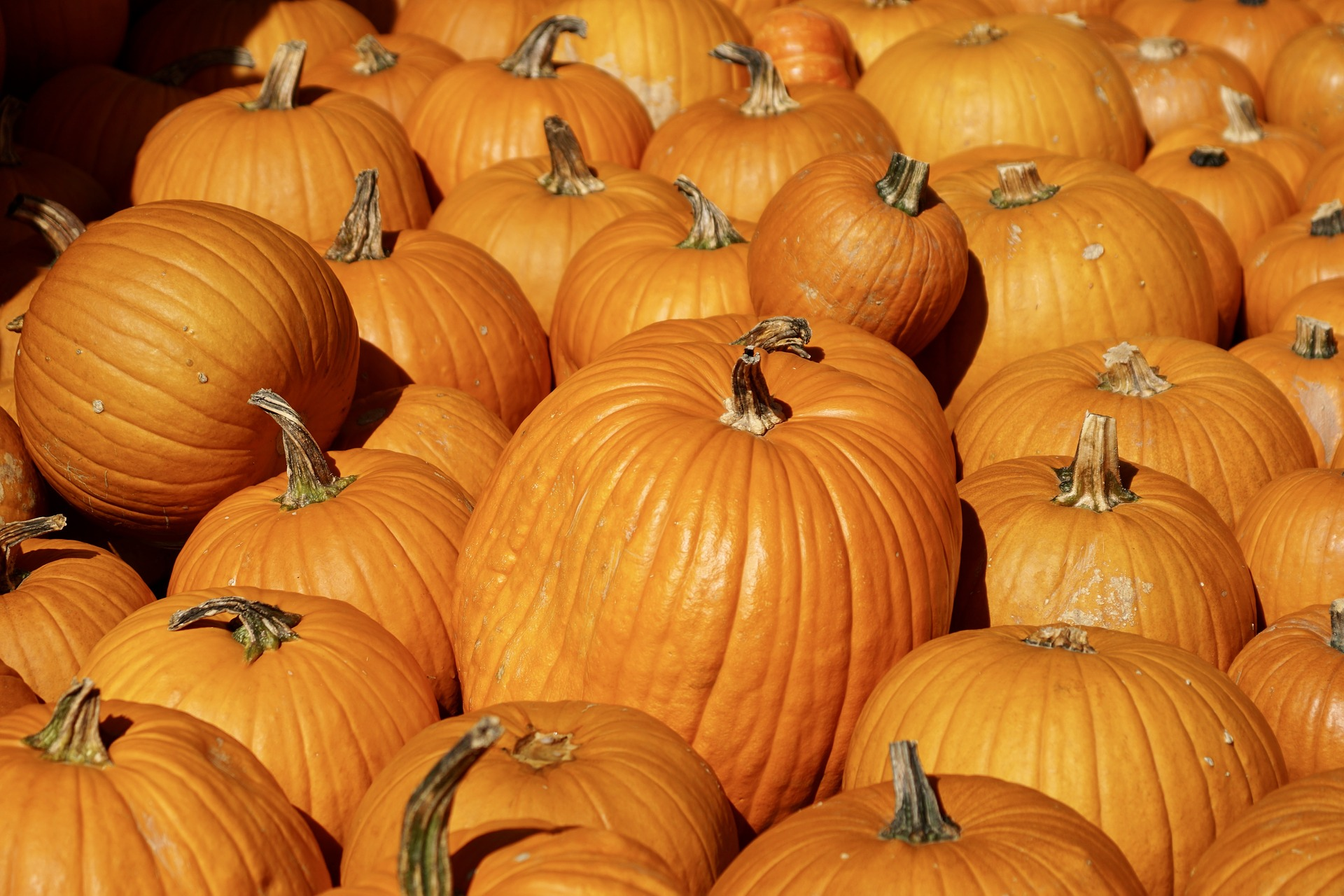 pumpkins can be used in stuffed dog toys