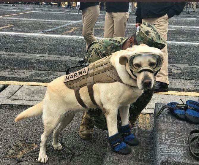 Service animals - Frida the Mexican service dog