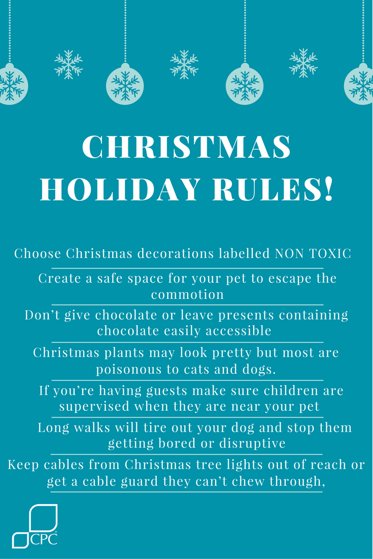 ensure your pets have a fun and safe Christmas