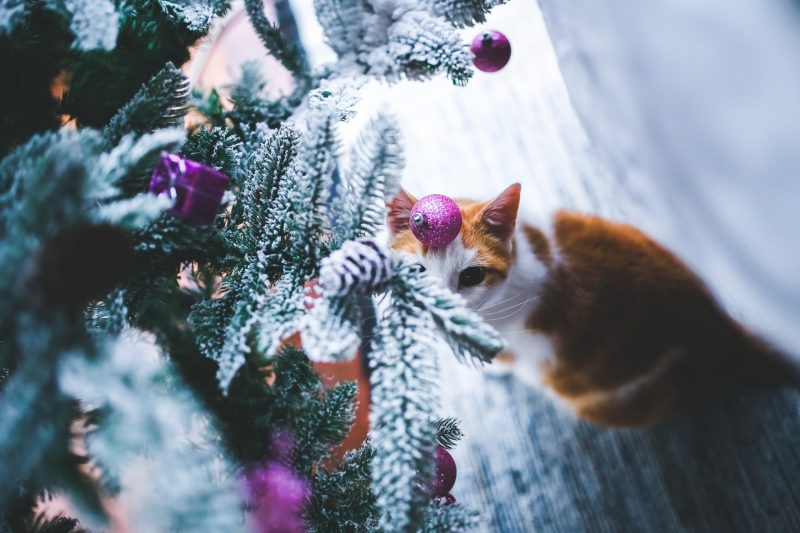 spoil your cat this christmas
