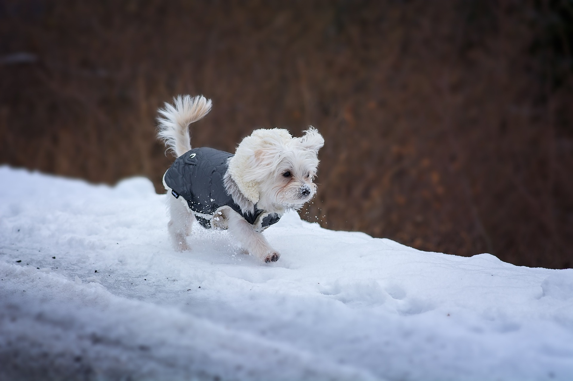 keep your dog warm this winter