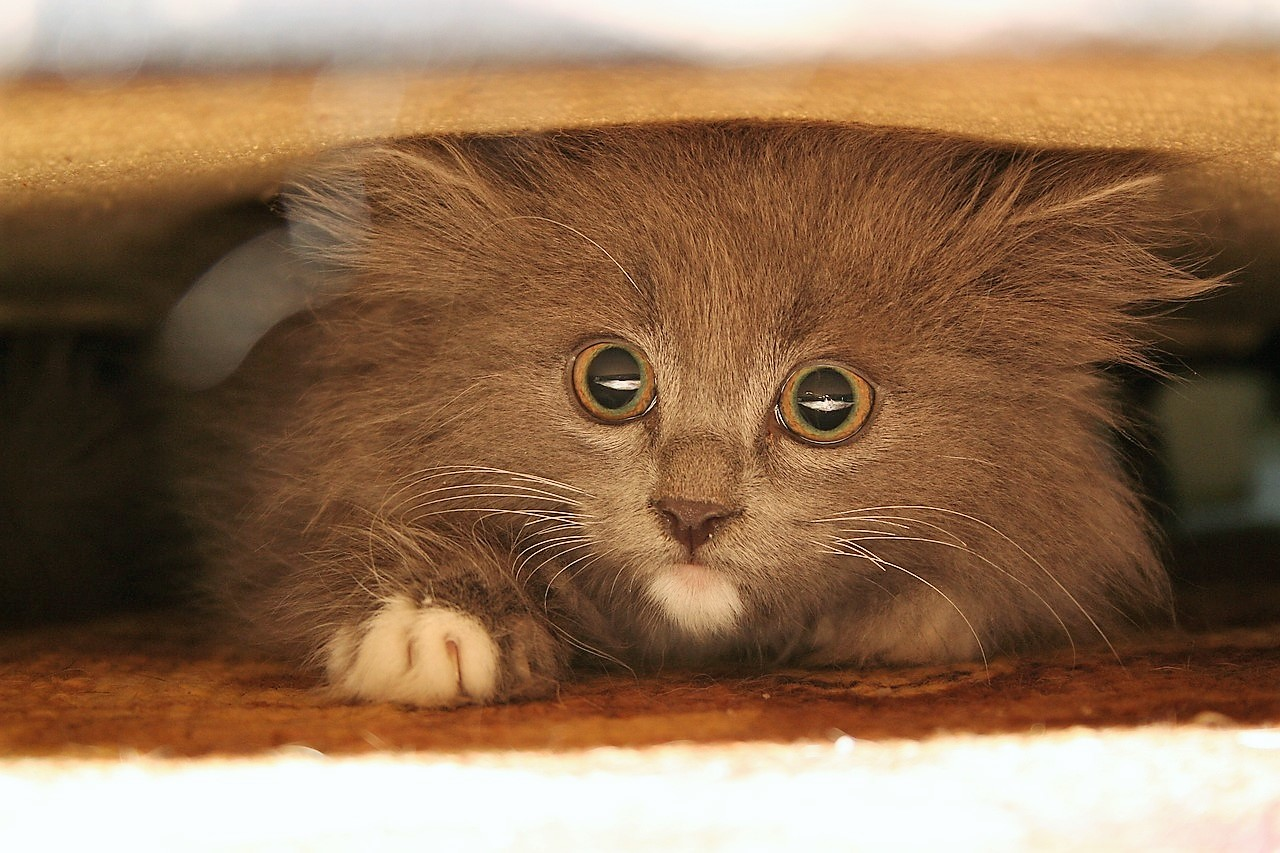 cat hiding under sofa - cat stress and anxiety