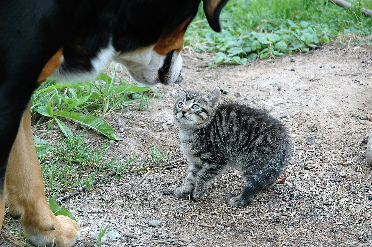 cat and dog together - cat stress and anxiety