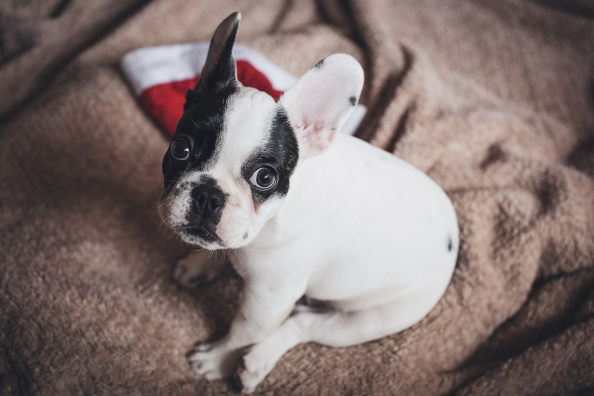 pets are for life and not just for Christmas