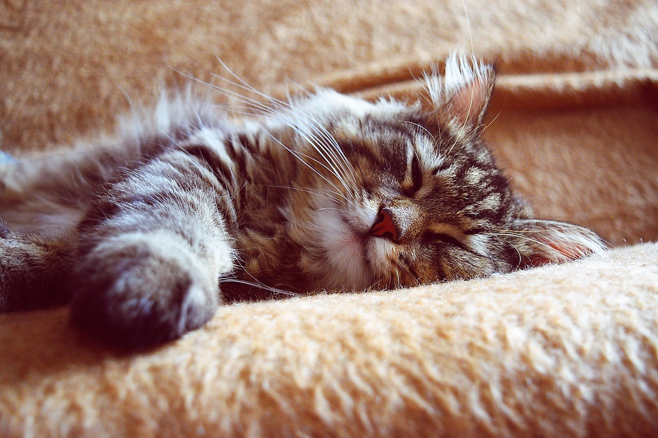 cat stress and anxiety