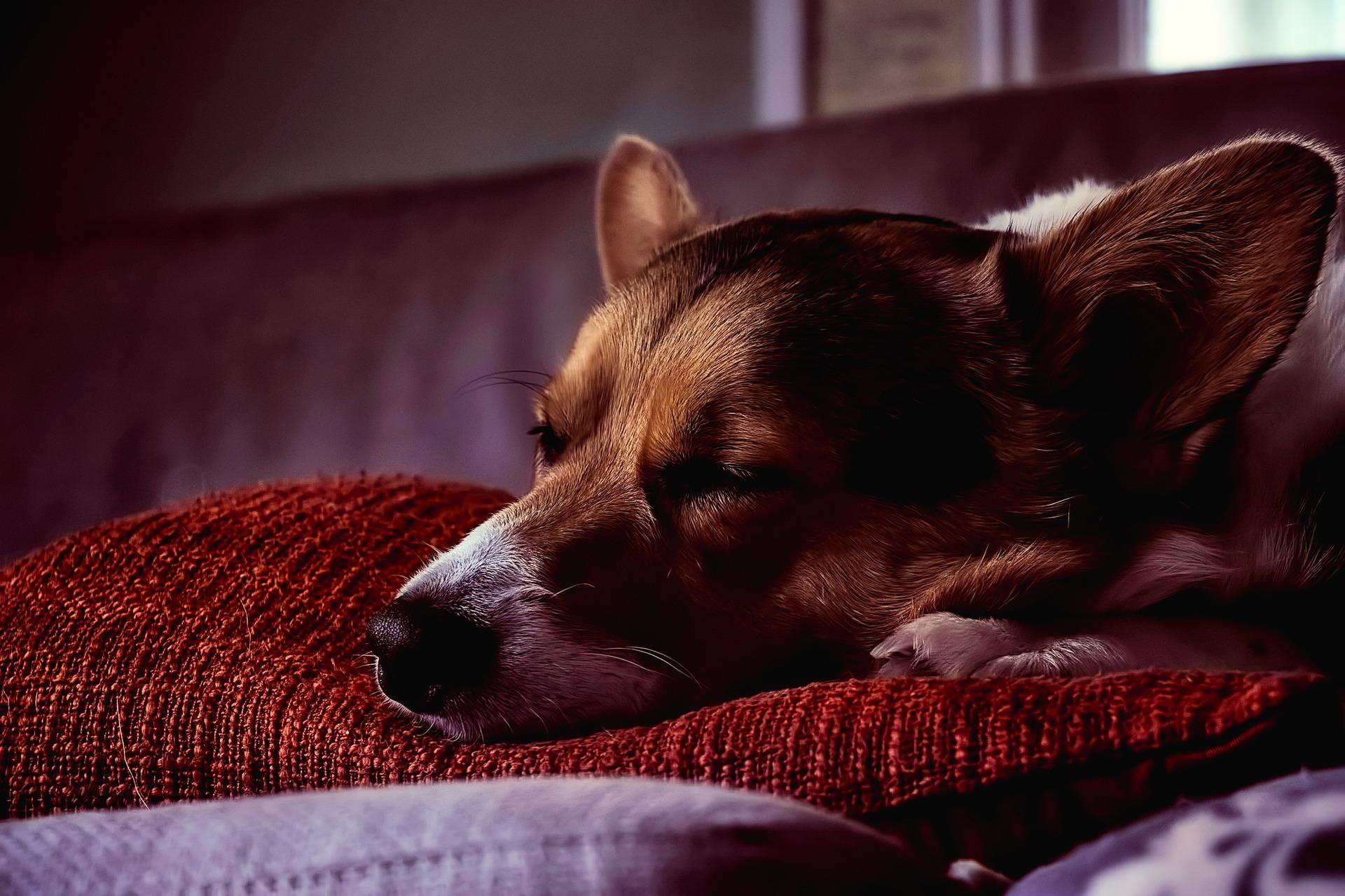 understanding the euthanasia process