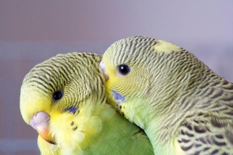 child's first pet - Birds