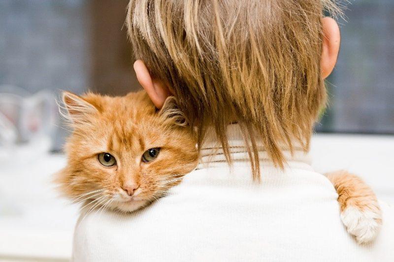 Child's first pet - cat