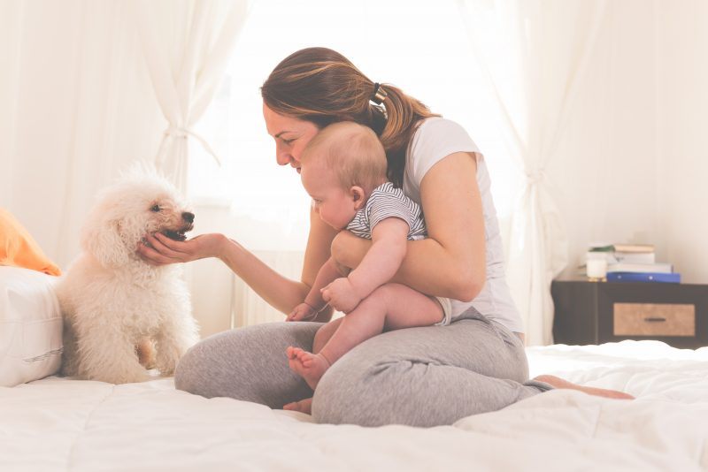 dog obedience - mother with baby and dog