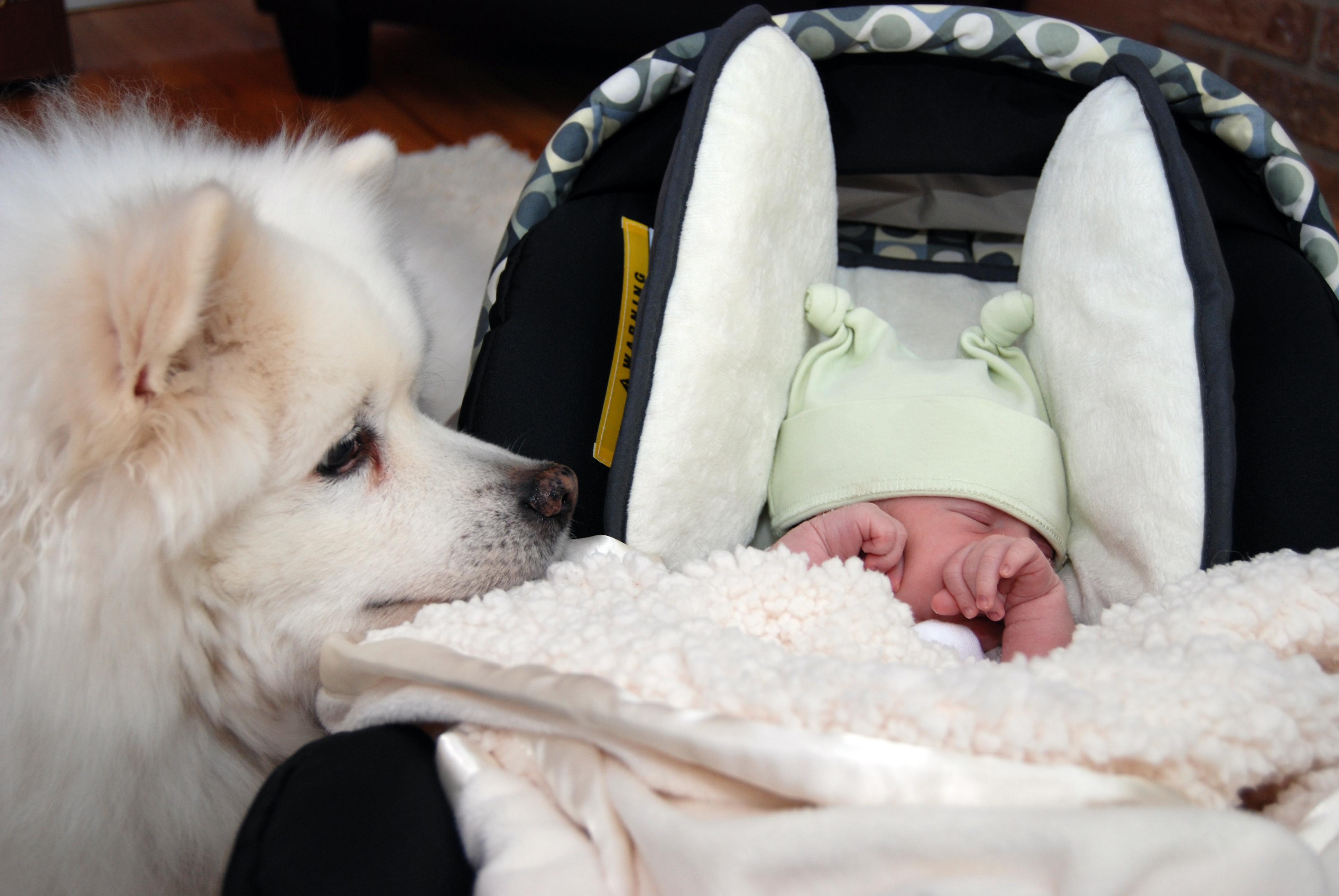 dog obedience skills - dog resting near baby in car seat