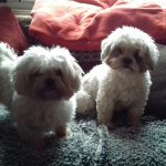 Peppa and Jojo
