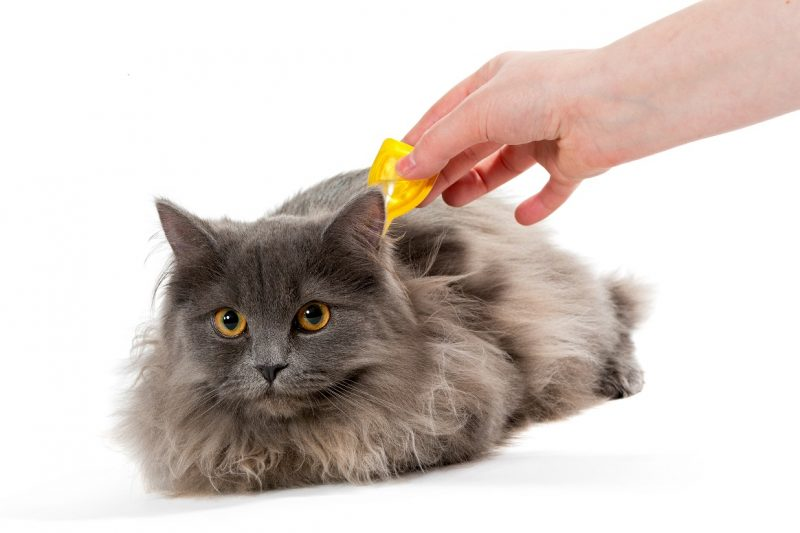 Flea treatments for kittens